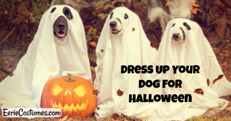 Dress Up Your Dog For Halloween