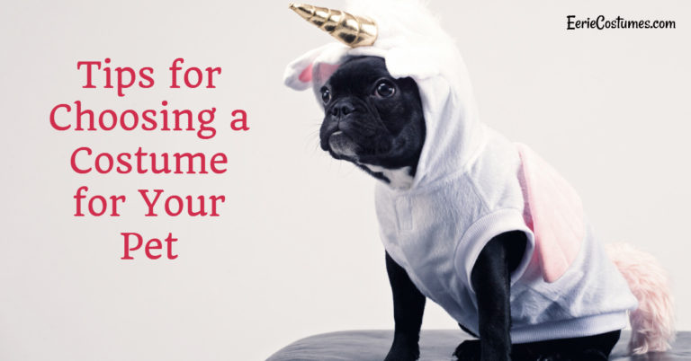 Tips for Choosing a Costume for Your Pet